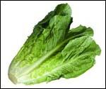 romaine_lettuce